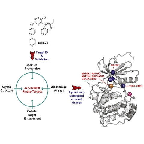 Leveraging Compound Promiscuity to Identify Targetable Cysteines within the Kinome
