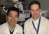 Researchers demonstrate RAS dimers are essential for cancer